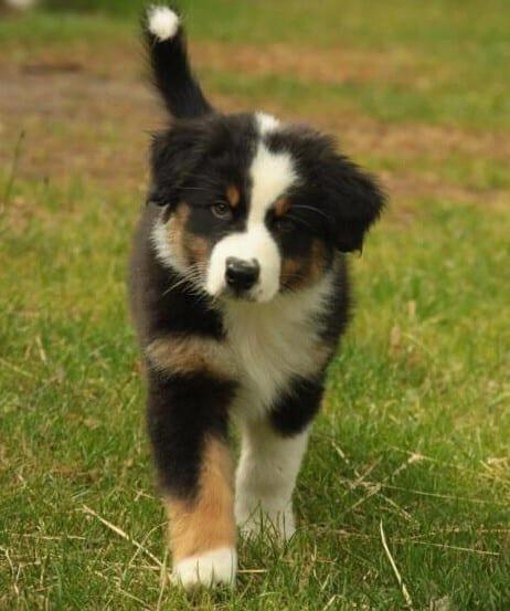 Pup-Lloyd