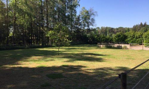 Losloopveld-TeamspiritAndDogs