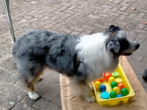 Hond hersenwerk